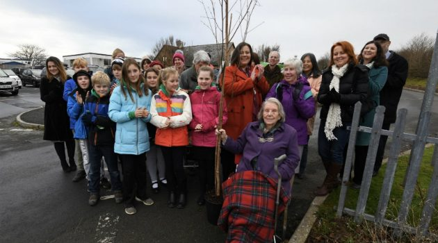 Commemorative tree planted for celebrated Swansea poet
